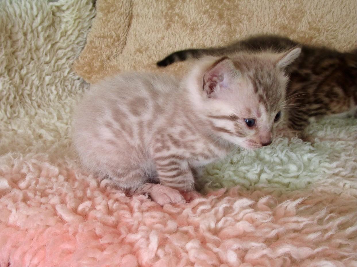 Femelle 1 - 1 mois