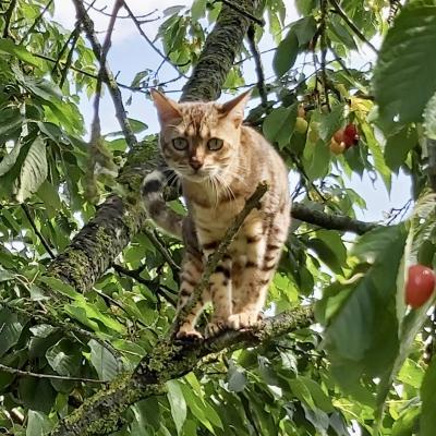 Poupou monte la garde dans le cerisier...gars à vous petits oiseaux !