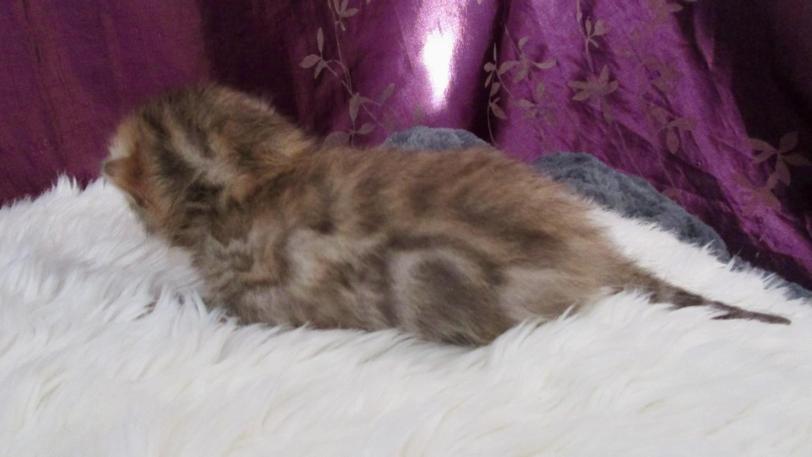 Femelle 3 à la naissance