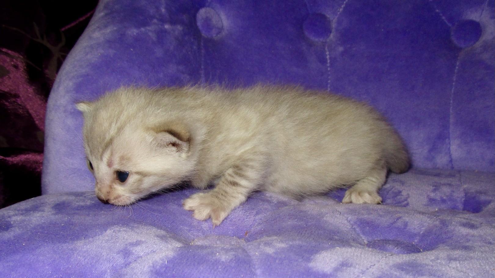 Femelle 1 - 3 semaines