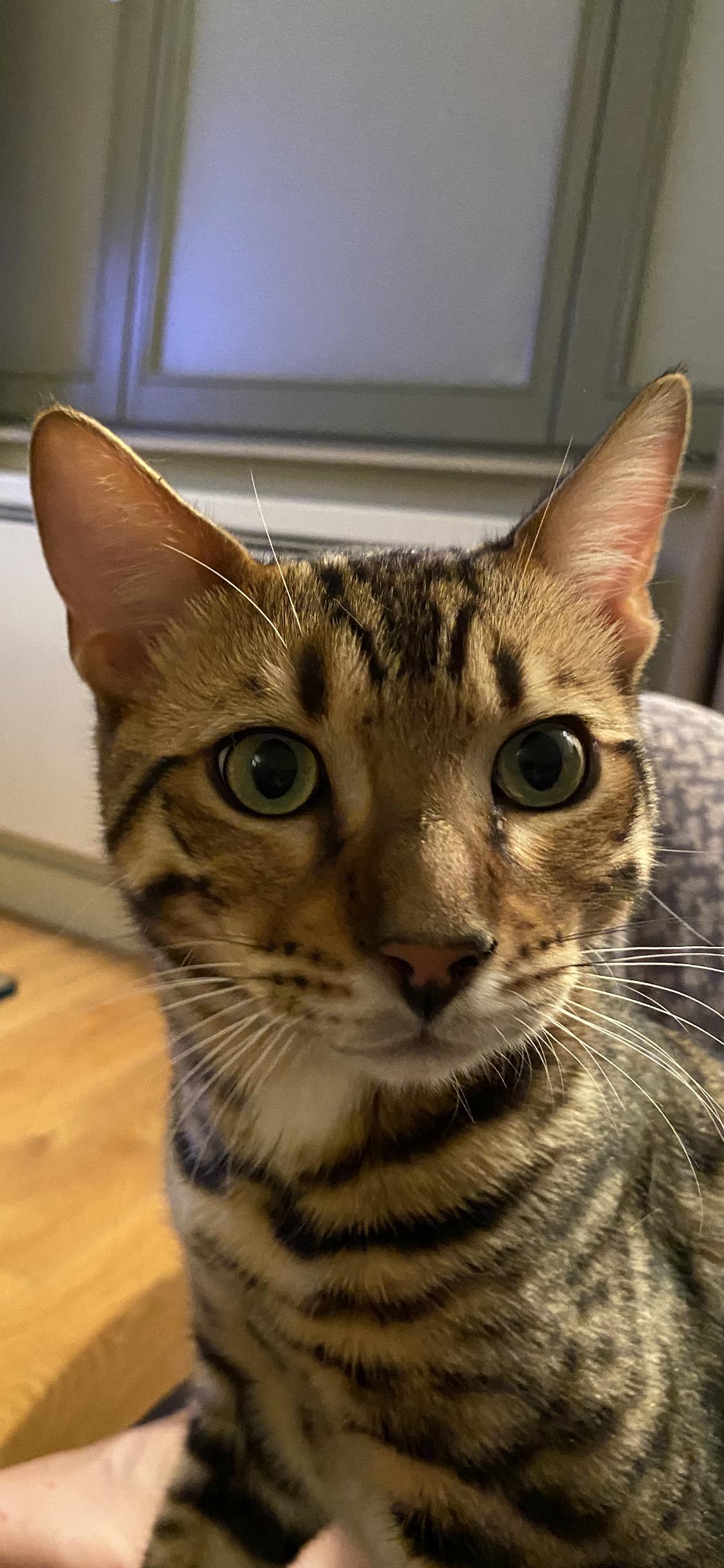 Ralph - 5 mois