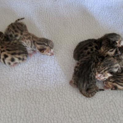 3 garçons, 4 filles