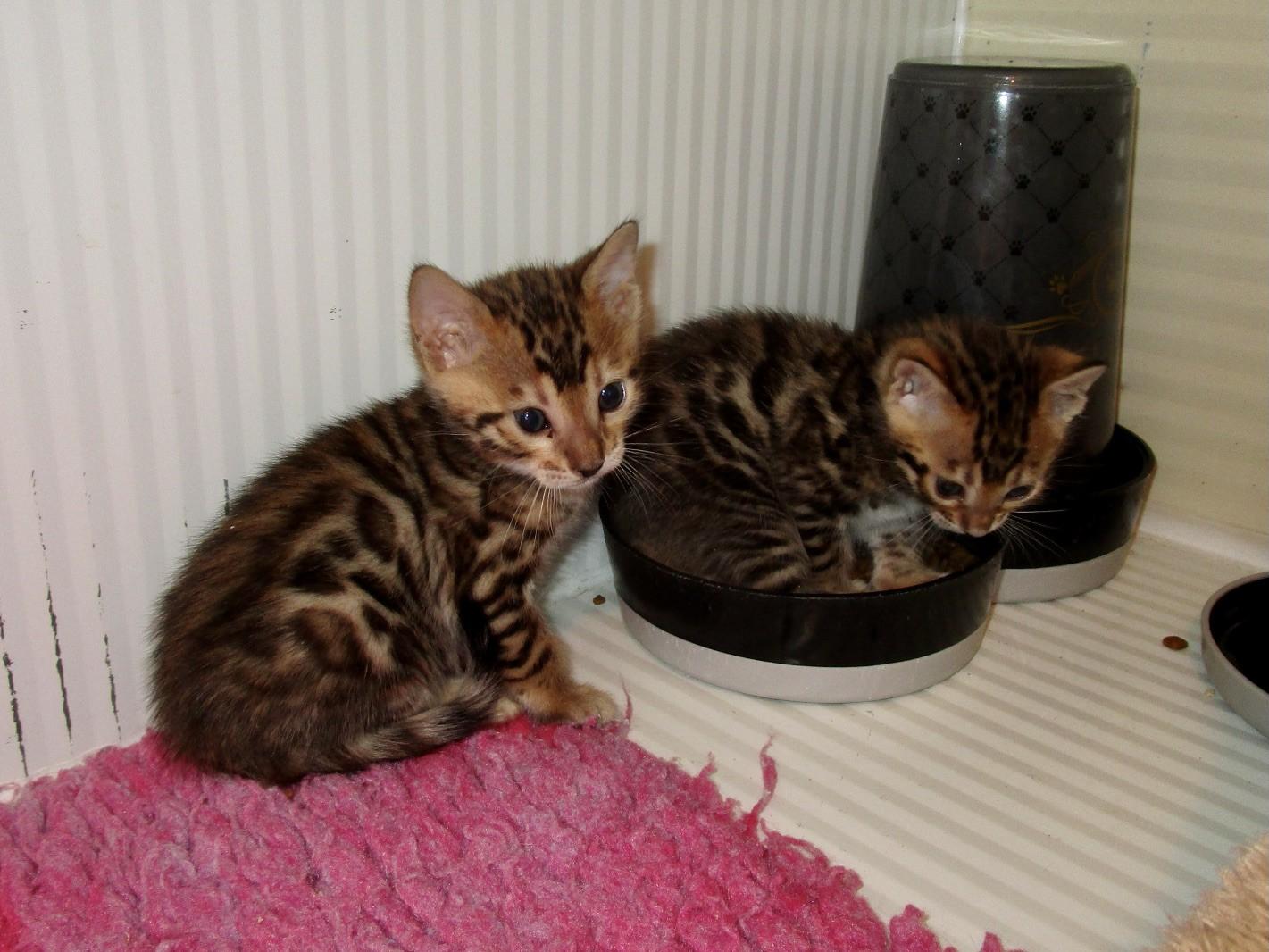 Mâle 2 et Femelle 1 - 1 mois...