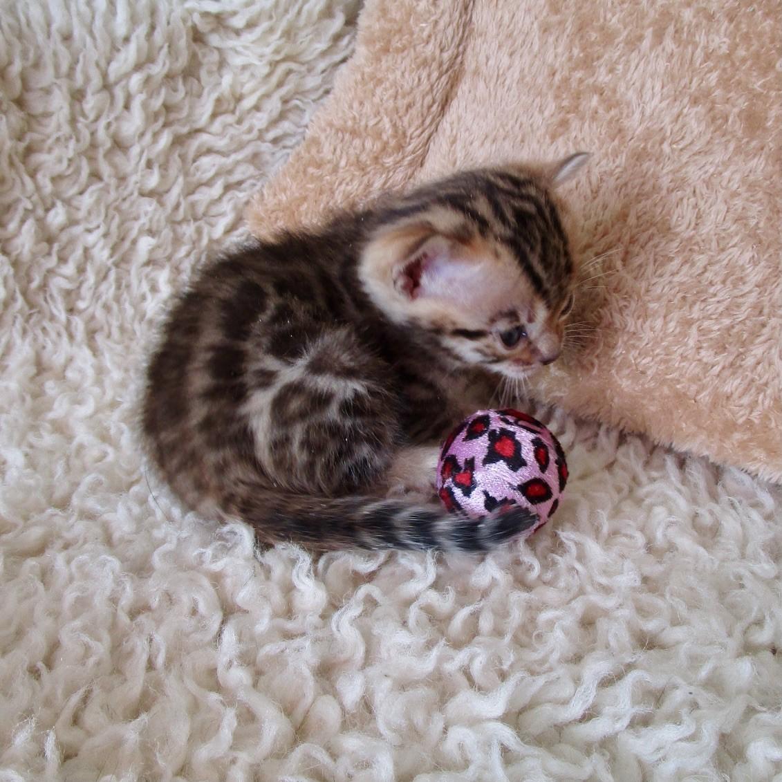 Femelle 2 - 1 mois