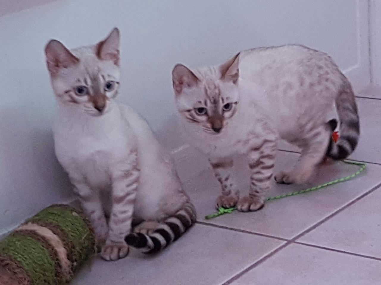 Nougat et Niwi Ninon - 3 mois
