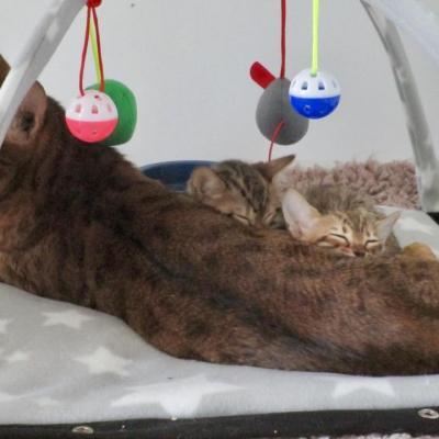 petite sieste avec maman