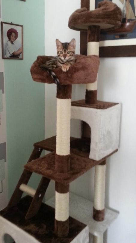 O'Malley en petit roi dans sa nouvelle maison...