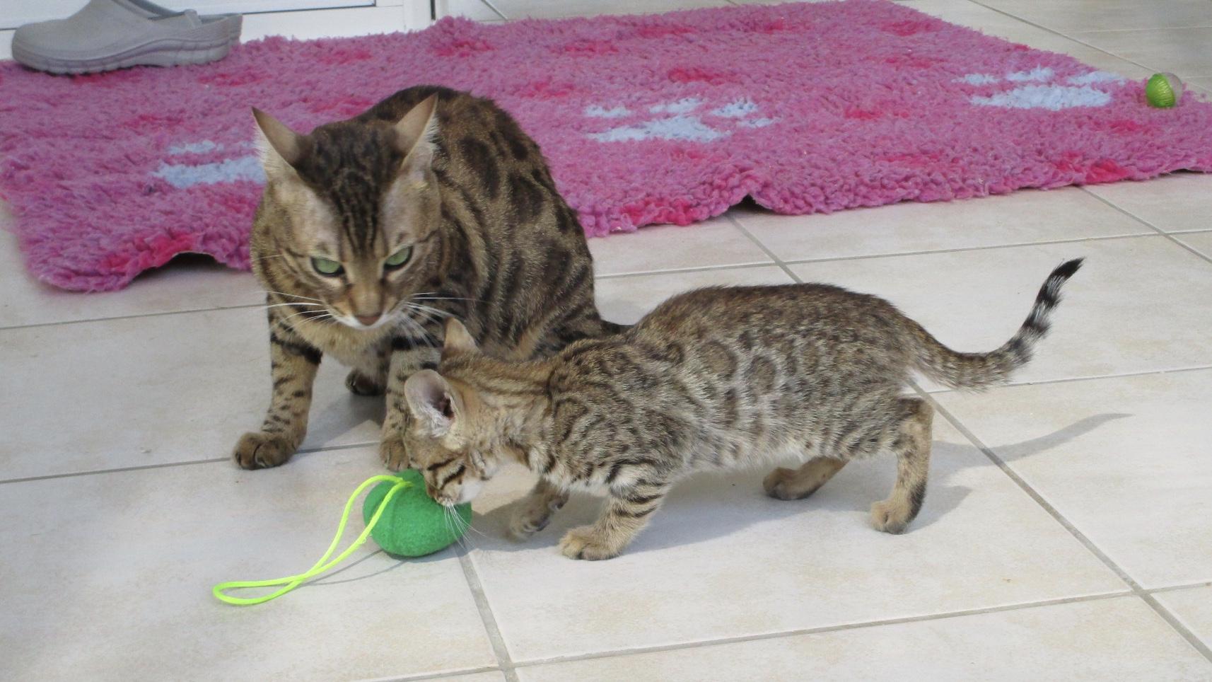 Femelle 1 avec maman