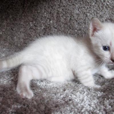 Mâle 1 - 3 semaines