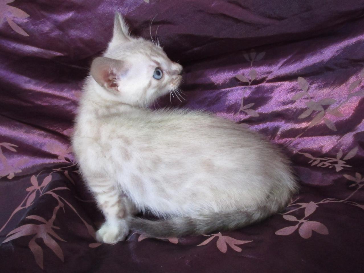 Mâle 3 - 5 semaines