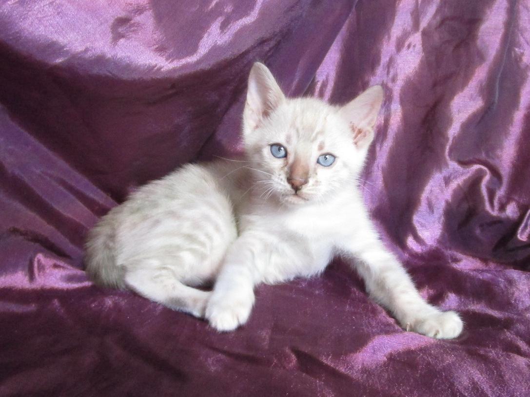 Mâle 1 - 5 semaines