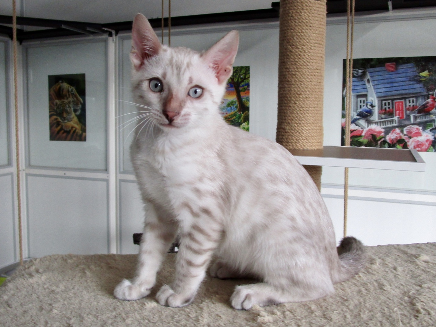 Mâle 2 - 2 mois et demi
