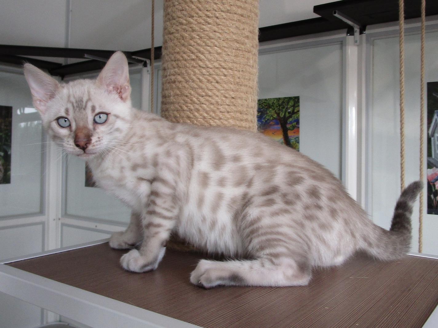Mâle 1 - 2 mois et demi