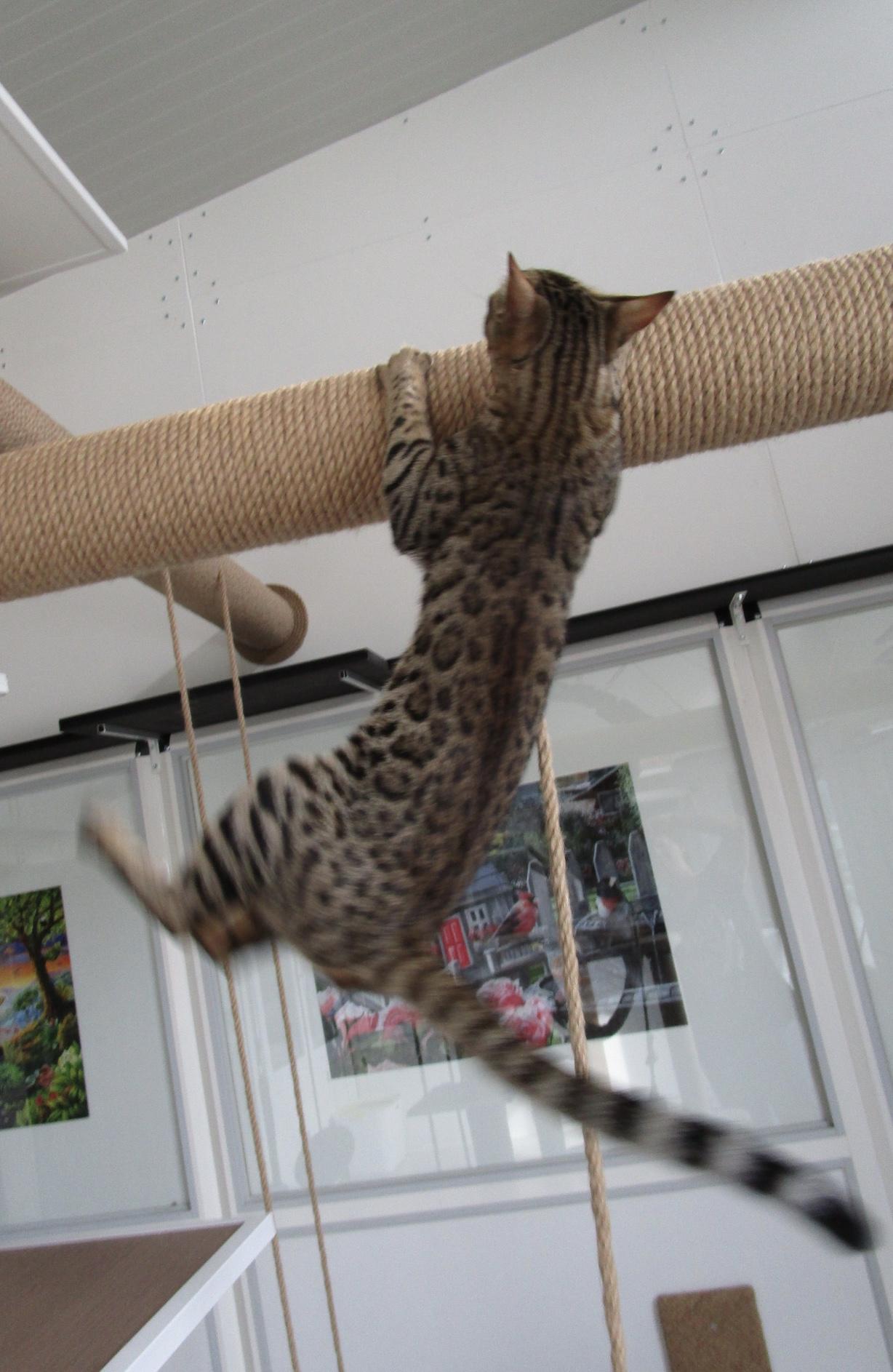 Oly'Wood en pleine acrobatie