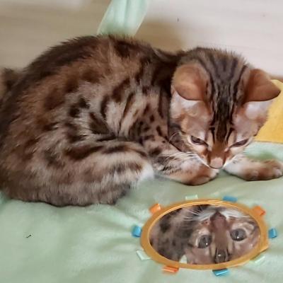 Miroir miroir... suis je la plus belle ?
