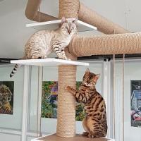 L'arbre à chat fait maison...